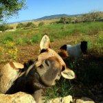 mallorca fincahotel travel urlaub insel island spanien spain sommer summer