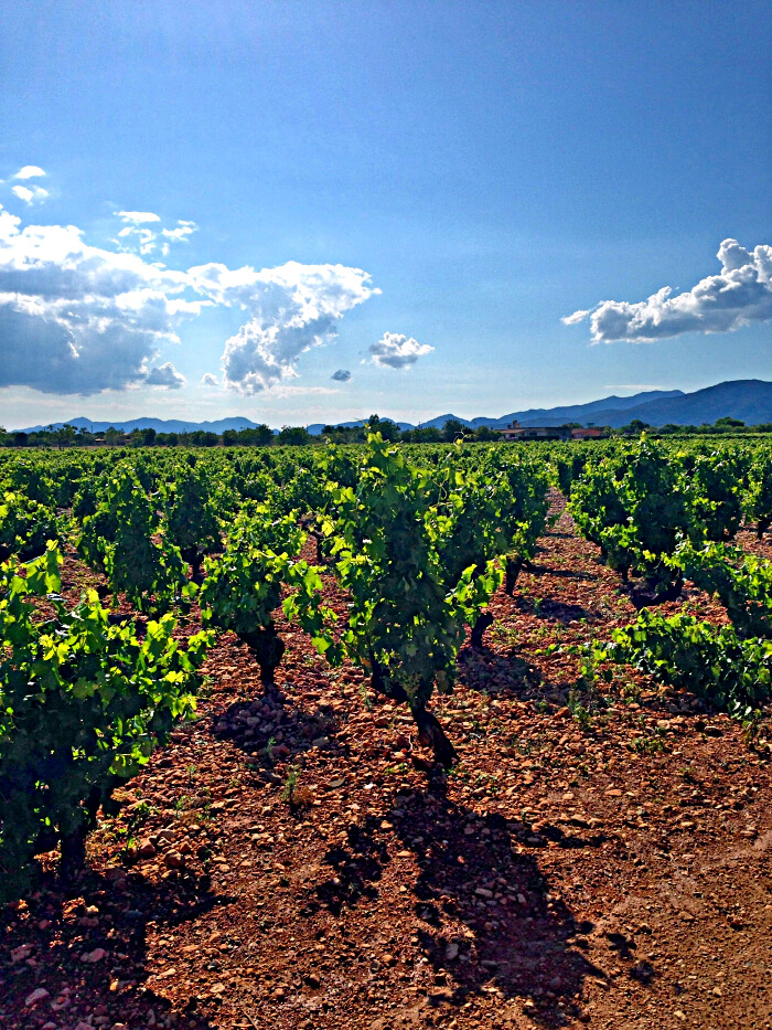 Mallorca Wine Tours with Mallorca Wine Express