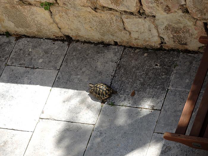 Kationette-lifestyleblog-travelblog-croatia-dubrovnik-apartments-villa-ani-tip-review-turtle