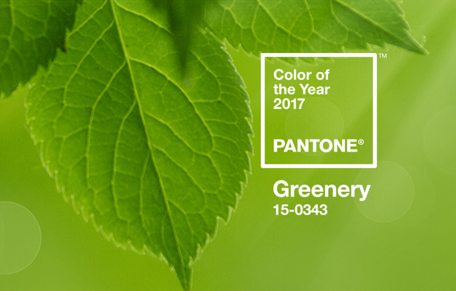 Kationette-Fashionblog-lifestyle-greenery-pantone-coloroftheyear-platform-fashion-dusseldorf-review